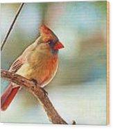 Female Cardinal - Digital Paint IIi Wood Print