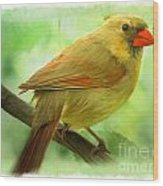 Female Cardinal In Elm Tree - Digital Paint Wood Print
