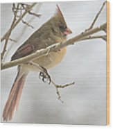 Female Cardinal In Snow 02 Wood Print