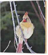 Female Cardinal In Tree Wood Print
