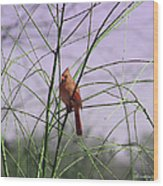 Female Cardinal In Willow Wood Print