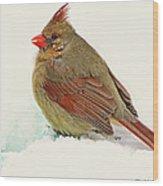 Female Cardinal In Winter II Wood Print