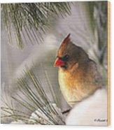 Female Cardinal Nestled In Snow Wood Print
