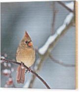 Female Cardinal On Cherry Tree In Snow Wood Print