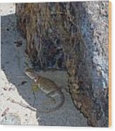 Female Collared Lizard Wood Print