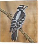 Female Downey Woodpecker Wood Print