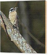 Female Downy Woodpecker Wood Print