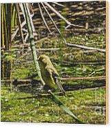 Female Gold Finch Drinking Wood Print