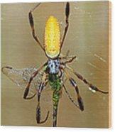 Female Golden Silk Spider Eating Wood Print