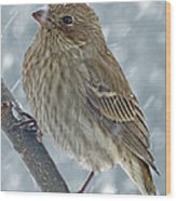 Female House Finch In Snow 1 Wood Print