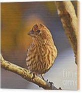 Female Housefinch Wood Print