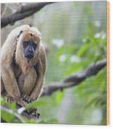 Female Howler Monkey Wood Print