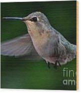 Female Hummingbird Anna's In Flight Wood Print