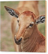 Female Impala Wood Print