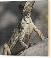 Female Jesus Lizard Wood Print