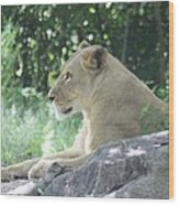 Female Lion On Guard Wood Print