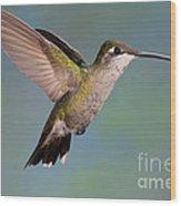 Female Magnificent Hummingbird At Flower Wood Print