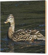 Female Mallard And Duckling Wood Print