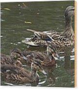 Female Mallard Duck And The Little Ones Wood Print