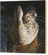 Female Mallard In Pond Wood Print