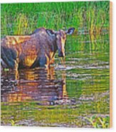 Female Moose Near Airport In Chicken-alaska   Wood Print