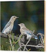 Female Mountain Bluebird With Fledgling Wood Print