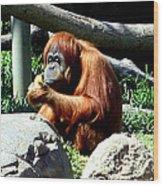Female Orangutan-san Diego Wood Print