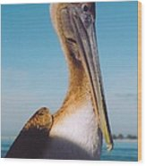 Female Pelican Wood Print