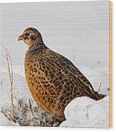 Female Pheasant Wood Print