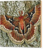 Female Promethea Moth Wood Print