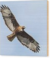 Female Red-tailed Hawk Wood Print by Carl Jackson