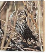 Female Red-winged Blackbird Wood Print