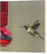 Female Ruby Throated Hummingbird Wood Print