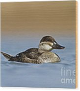 Female Ruddy Duck Wood Print