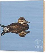 Female Ruddy Duck Oxyurus Jamaicensis Wood Print