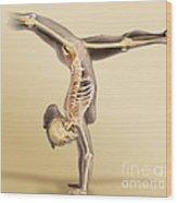 Female Skeletal System Wood Print