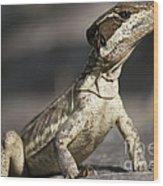 Female Striped Lizard Wood Print