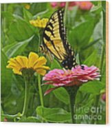 Female Tiger Swallowtail Butterfly With Pink And Yellow Zinnias Wood Print