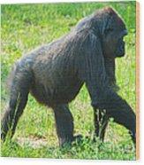 Female Western Lowland Gorilla Wood Print