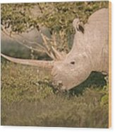 Female White Rhinoceros Grazing Wood Print