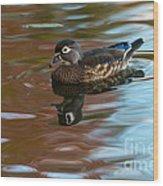 Female Wood Duck In Fall Colors Wood Print