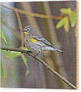Female Yellow-rumped Warbler Wood Print