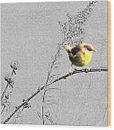 Female Yellow Throat On Gray Wood Print