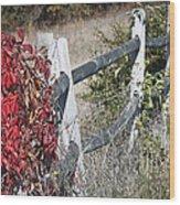 Fence And Creeper Wood Print