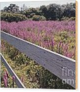 Fence And Purple Wild Flowers Wood Print