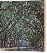 Fence And Wormsloe In Savannah  Wood Print