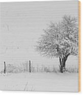 Fence Line In The Wintertime  Wood Print