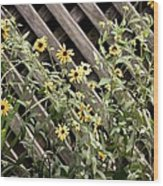 Fence Lined Wildflowers Wood Print