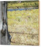 Fence Pasture Horse 14419 Wood Print