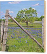 Fenced-in Beauty Wood Print by Lynn Bauer